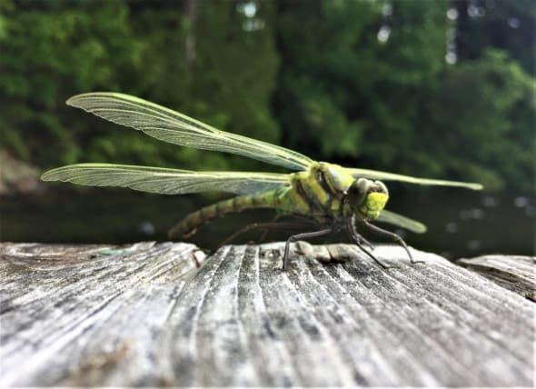 Dragonfly Preflight Wing Check