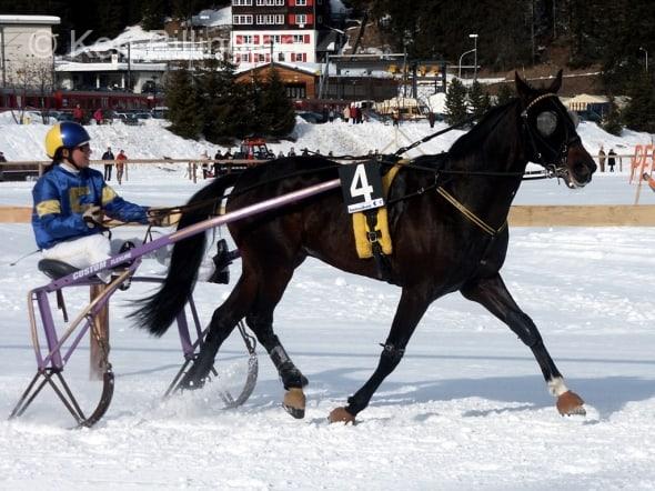 Horse (Equus ferus caballus)