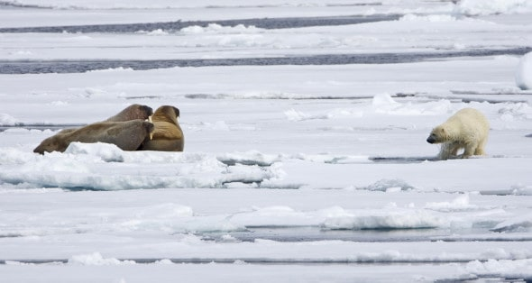 Confrontation on the Ice