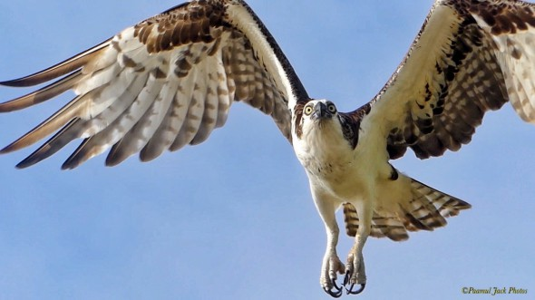 "Osprey: ""What'd Ya Doing So High So High Up?"""