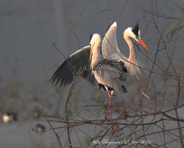 The Courtship Dance