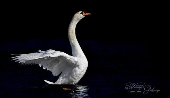 Bird Majesty