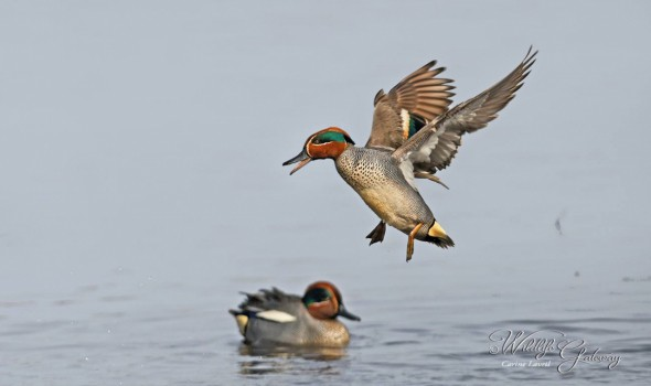 Happy Teal !