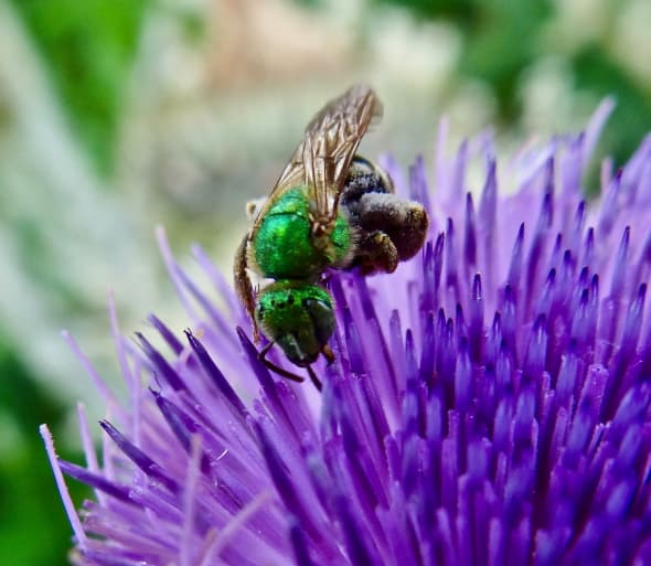Toronto Bee