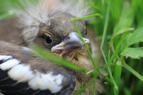 My little, hungry babybird