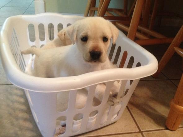 puppies-by-gayle-krejci