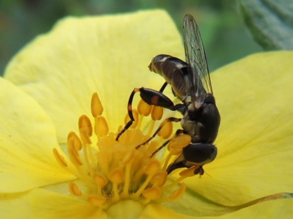 Fly on a flower by Mia Fergusson