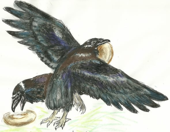 North American Ravens with Donuts by Susan J. Lee