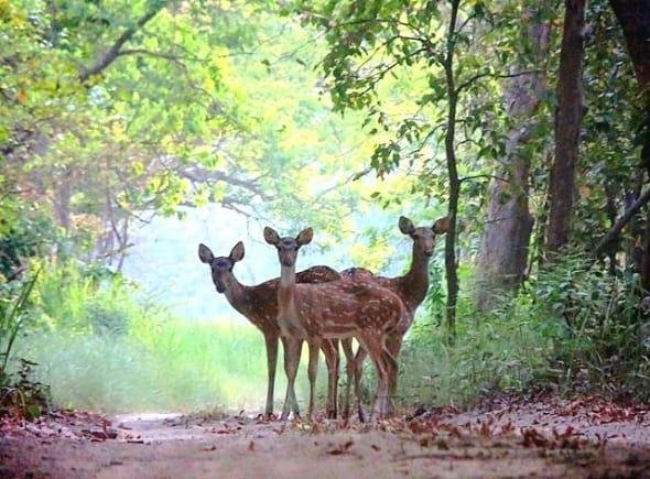 Together by Anurag Swaroop