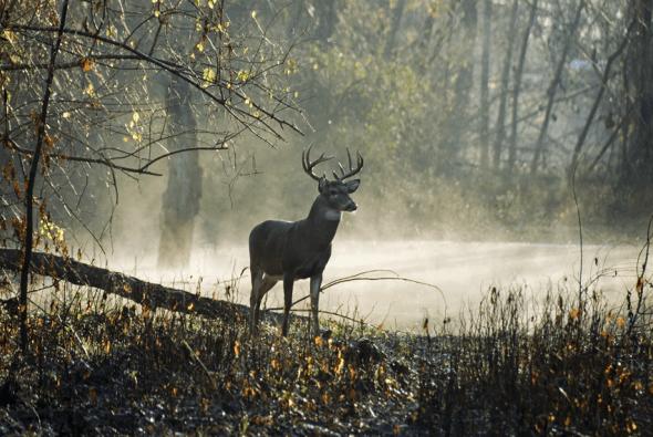 Swamp Buck by Richard Harmon