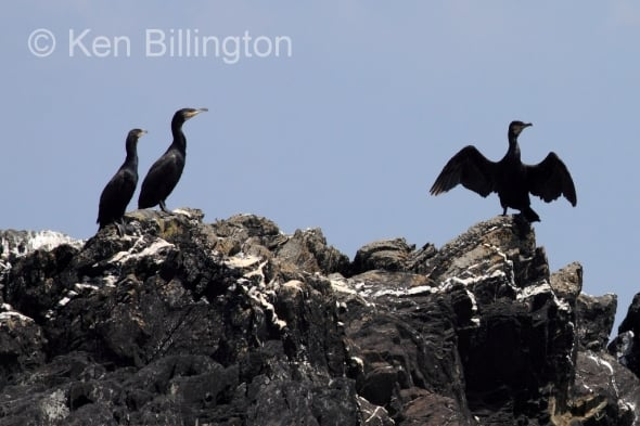Shag drying out