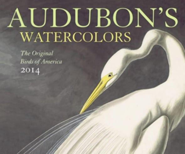 audobons-watercolors-2014-wall-calendar-the-original-birds-of-america