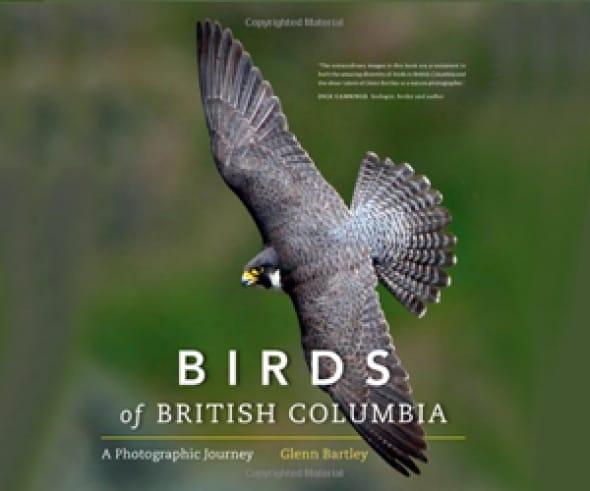 birds-of-british-columbia-a-photographic-journey