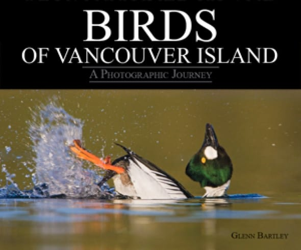 birds-of-vancouver-island-a-photographic-journey