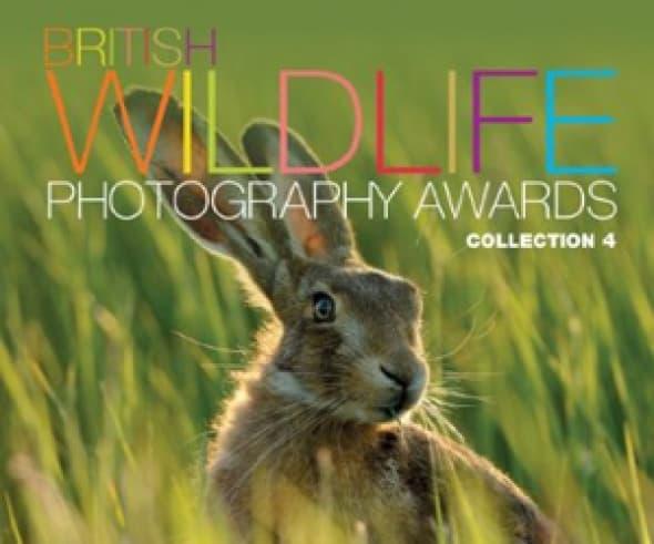 british-wildlife-photography-awards-collection-4