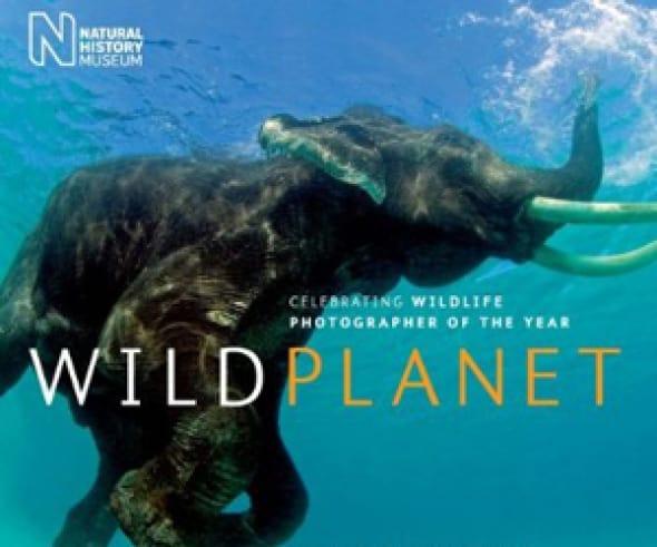 wild-planet-celebrating-wildlife-photographer-of-the-year
