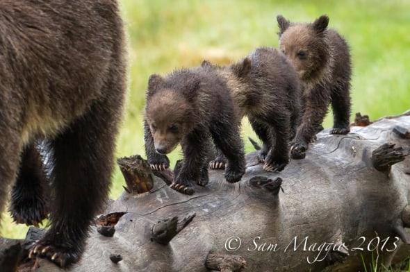 Following Momma