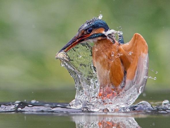 Liquid Lunch by Jamie MacArthur