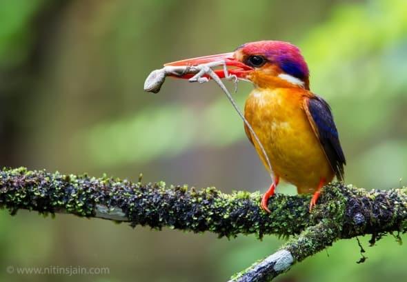 'Small Hunter' by Nitin Jain