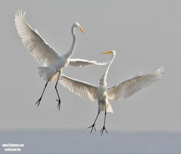 'Dancing' by Lesley van Loo