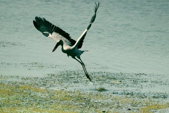 Bird Take Off