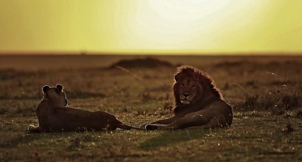 King´n Queen of Mara