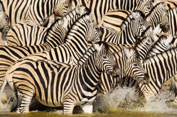 Striped chaos