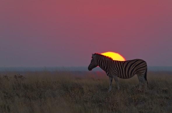 Etosha sunset