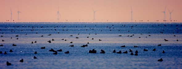 Wind and Waterfowl: Sunrise Mirage