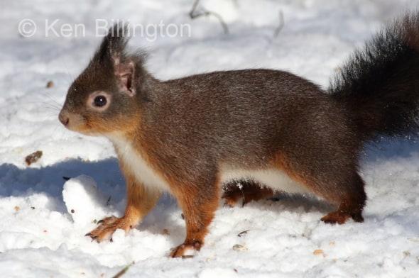 Bright-eyed and Bushy-tailed!