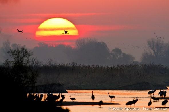 Sandhill Cranes on the Platte River
