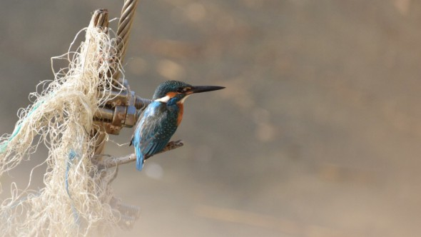 Kingfisher Nuts and Bolts
