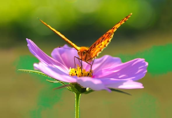 Butterfly Dreaming