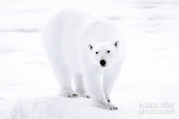 """The Only Real """"Paws"""" in Global Warming"""