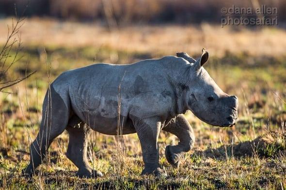 Celebrating World Rhino Day