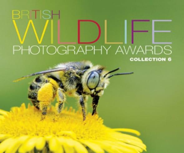 british-wildlife-photography-awards-collection-6