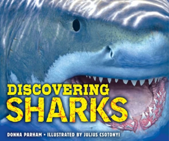discovering-sharks
