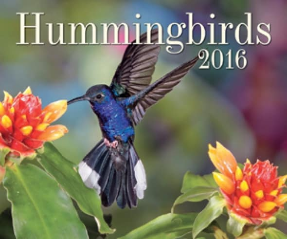 hummingbirds-2016