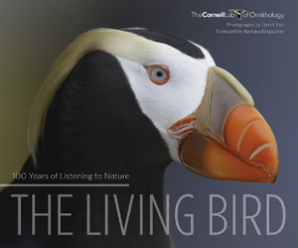 the-living-bird-100-years-of-listening-to-nature
