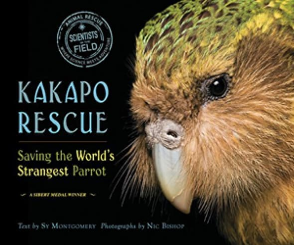 kakapo-rescue-saving-the-worlds-strangest-parrot