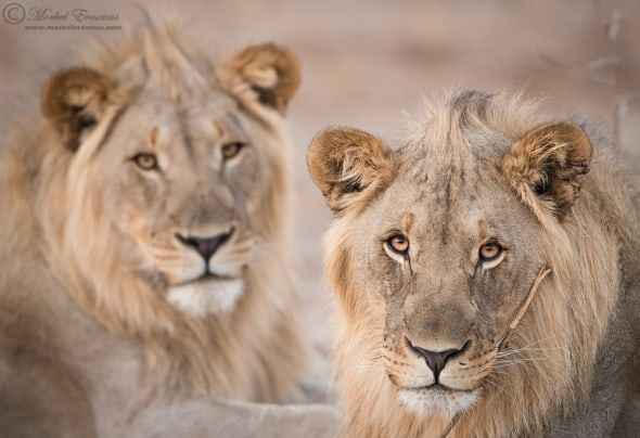 Two Young Kings