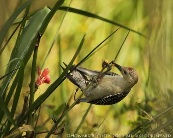 Native Aloe Dinning