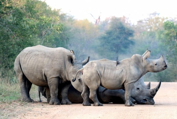 Kruger Road Block