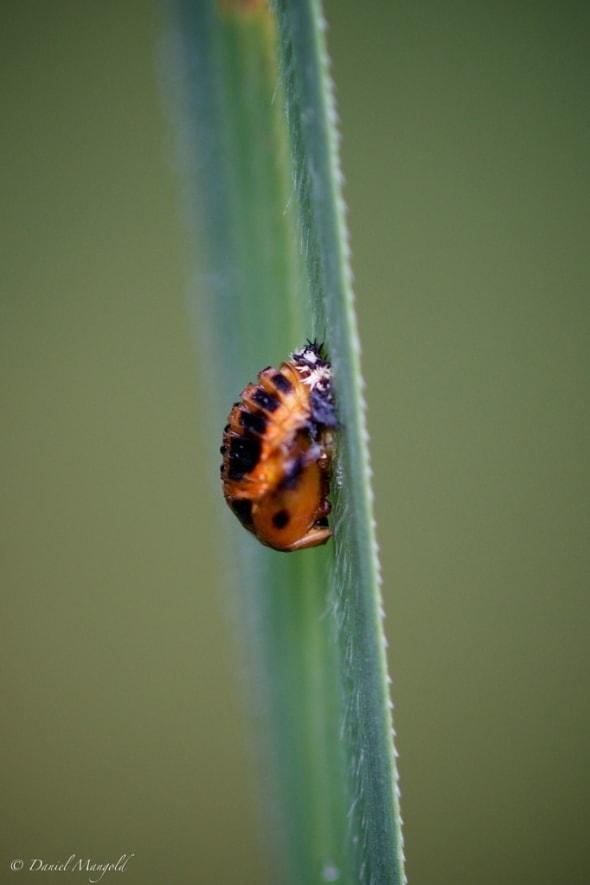 From Larva to Ladybug