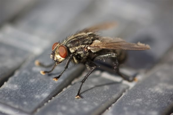 The Smiling Fly