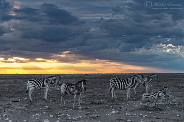Dawn of the Striped Ones