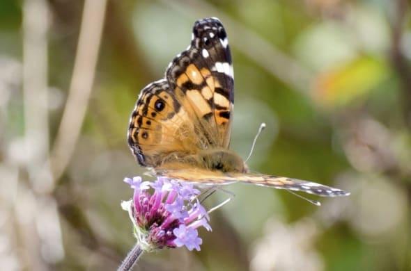 A Butterfly Break