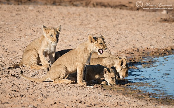 A day spent with a Lion Creche