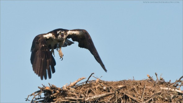 Osprey Lift Off