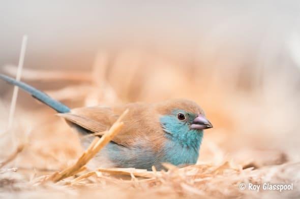 Soft, Sweet & Powder Blue
